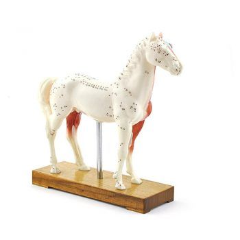ARTMED MODELO CABALLO ACUPUNTURA IT108