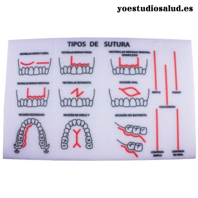 modelo sutura